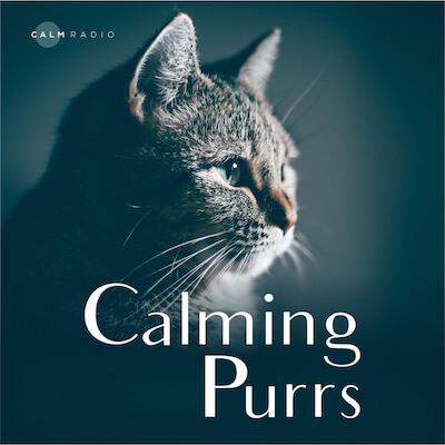 在平静广播Calm Radio收听猫的呼噜声和其他许多的放松声音和平静音乐。