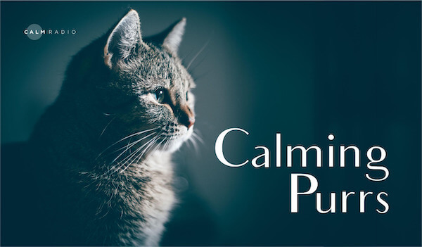 CALMING PURRS